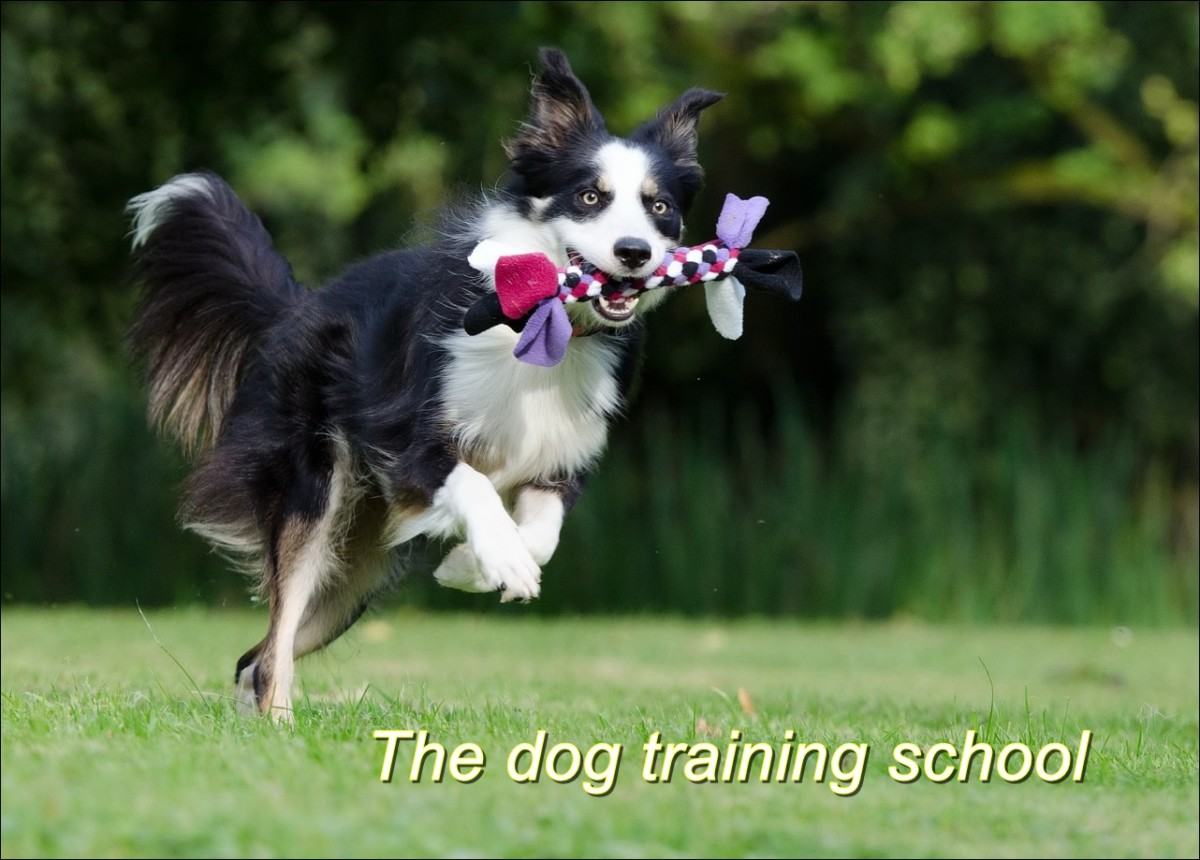 The Best Dog Training School